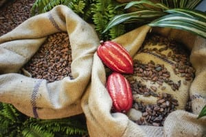 Cocoa Beans and Fruits Ecuador